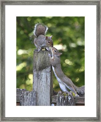Squirrelly Affection Framed Print