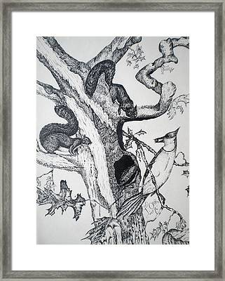 Squirrels And Bird Framed Print by Tammera Malicki-Wong