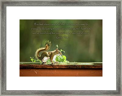 Framed Print featuring the photograph Squirrel's Heart Beat-george Eliot by Onyonet  Photo Studios