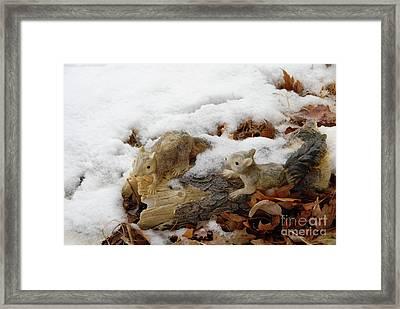 Squirrels In Winter Framed Print by Bill Hyde