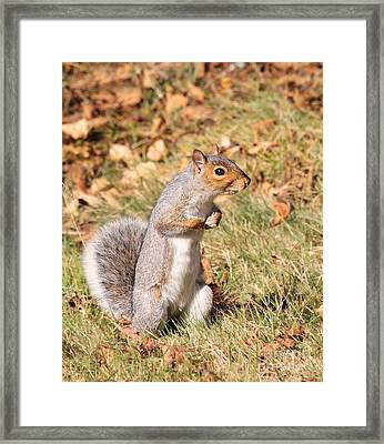 Framed Print featuring the photograph Squirrely Me by Debbie Stahre