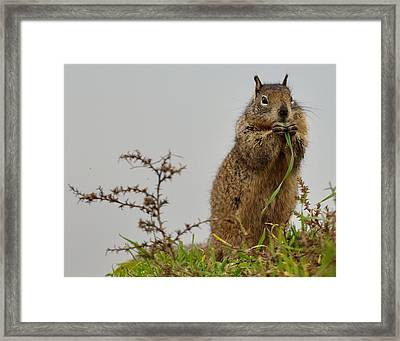 Squirrely Snacks Framed Print
