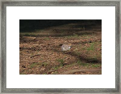 Squirrrrrrel? Framed Print by John Rossman