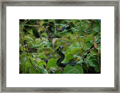 Sssssss Framed Print by William Thomas