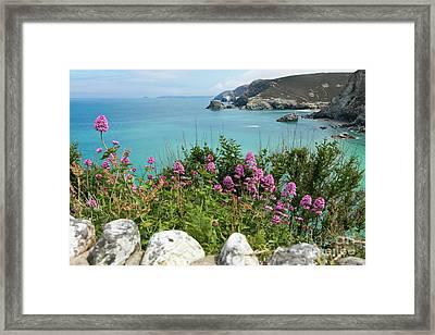 St Agnes Valerian Framed Print by Terri Waters