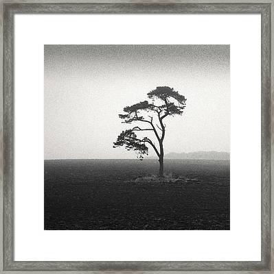 St Cyrus Tree Framed Print by Dave Bowman