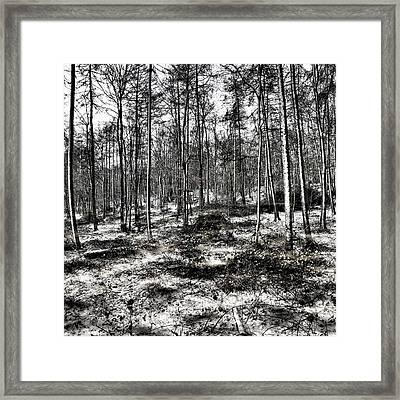 St Lawrence's Wood, Hartshill Hayes Framed Print by John Edwards