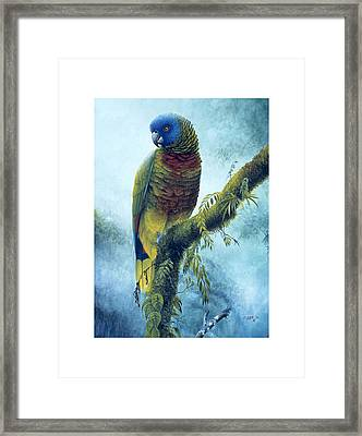 St. Lucia Parrot - Majestic Framed Print by Christopher Cox