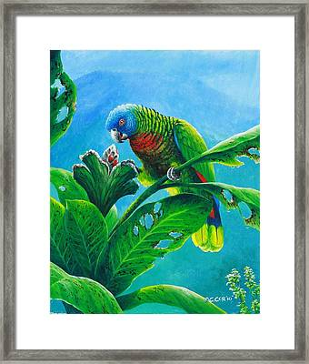 St. Lucia Parrot And Bwa Pain Marron Framed Print by Christopher Cox