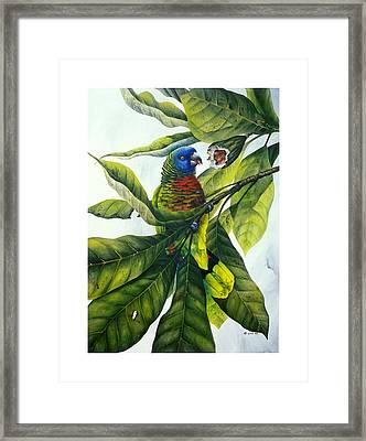 St. Lucia Parrot And Fruit Framed Print by Christopher Cox