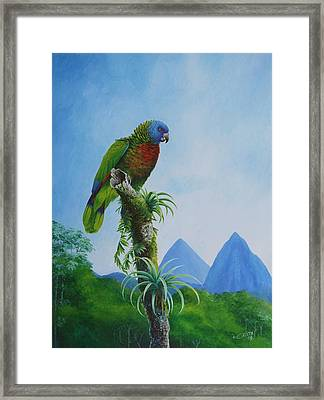 St. Lucia Parrot And Pitons Framed Print by Christopher Cox