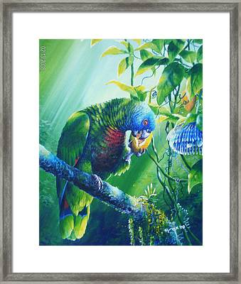 St. Lucia Parrot And Wild Passionfruit Framed Print by Christopher Cox