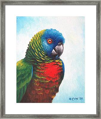 St. Lucia Parrot Framed Print by Christopher Cox