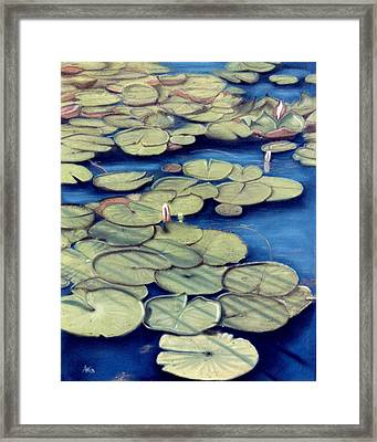 St. Marks Waterlilies Framed Print by Jan Amiss