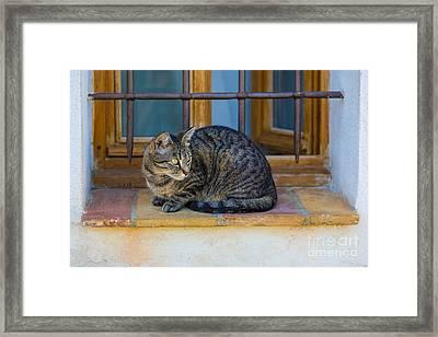 St Paul Cat Framed Print