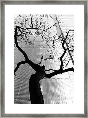 St. Vitus Dance Framed Print by Kreddible Trout