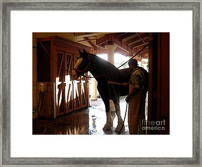 Stable Groom - 1 Framed Print