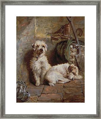 Stablemates Framed Print by John Fitz Marshall
