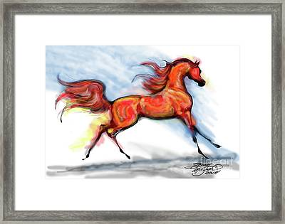 Staceys Arabian Horse Framed Print by Stacey Mayer