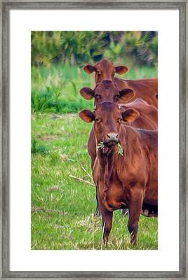 Stacked Up Cows          Framed Print