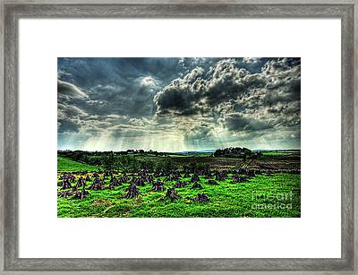 Stacking The Turf Framed Print by Kim Shatwell-Irishphotographer