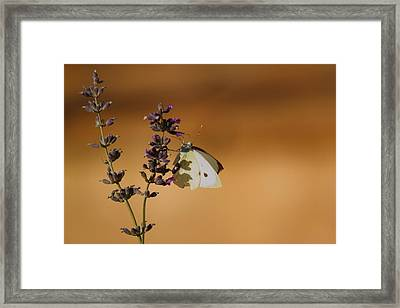 Framed Print featuring the photograph Stadler And Waldorf by Richard Patmore