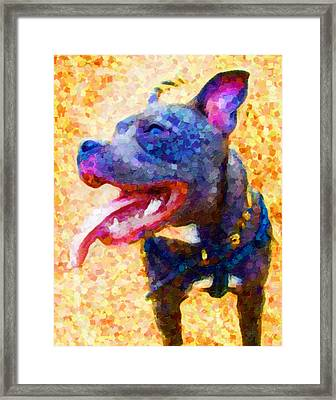 Staffordshire Bull Terrier In Oil Framed Print by Michael Tompsett