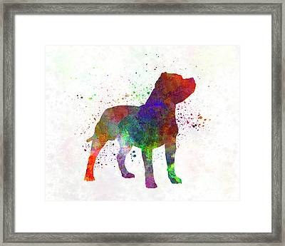 Staffordshire Bull Terrier In Watercolor Framed Print by Pablo Romero