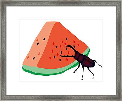 Stag Beetle Is Eating A Piece Of Red Watermelon Framed Print