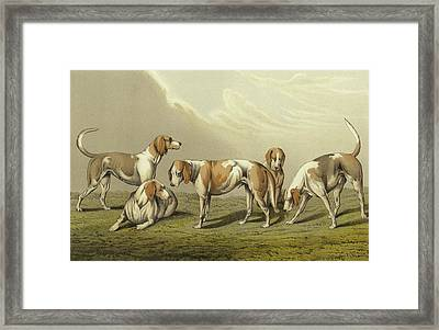 Stag Hounds Framed Print by Henry Thomas Alken
