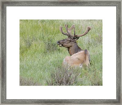 Stag Photo Framed Print