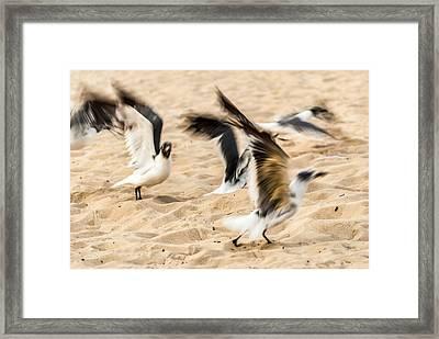Stages Of Flight Framed Print