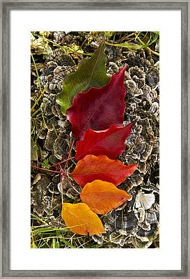 Stages Framed Print by Phil Koch