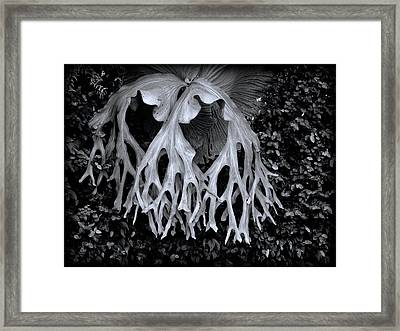 Framed Print featuring the photograph Staghorn Fern by Wayne Sherriff