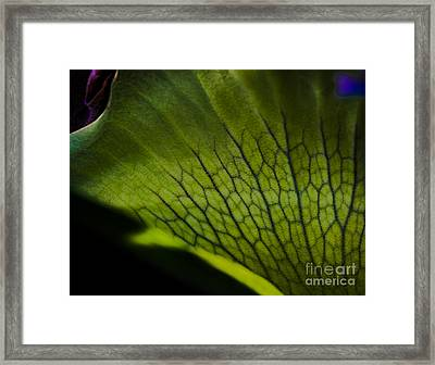 Staghorn Framed Print by Rich Governali