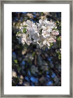 Stained Glass Bouquet Framed Print by Elsa Marie Santoro