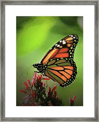 Stained Glass Butterfly Framed Print by Penny Lisowski