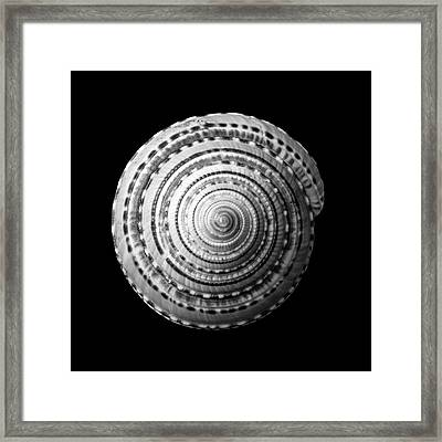 Staircase Or Sundial Shell  In Black And White Framed Print