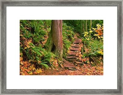 Stairway Forgotten Framed Print by Robert Evans