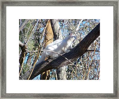 Stalking Ghost Framed Print