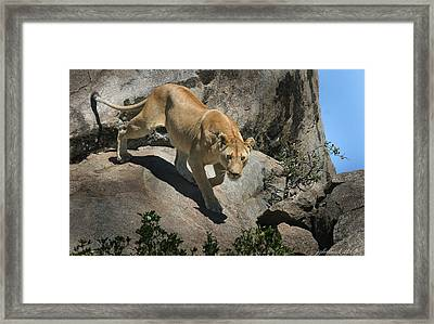 Stalking Humans Framed Print