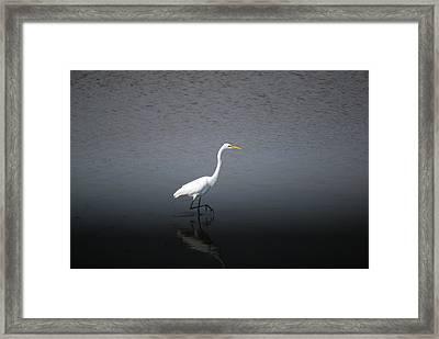 Stalking Framed Print by John Roncinske