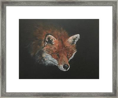 Red Fox In Stalking Mode Framed Print