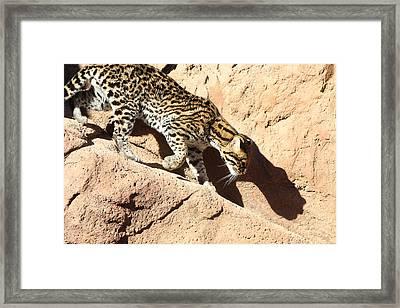 Ocelot Shadow, Arizona Framed Print