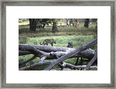 Stalking Framed Print by Wade Worsley