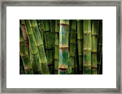 Stalks Framed Print by Kelley King