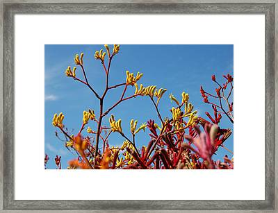 Stalks Of Color Framed Print by Jean Booth