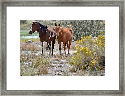 Stallion And Mare Framed Print