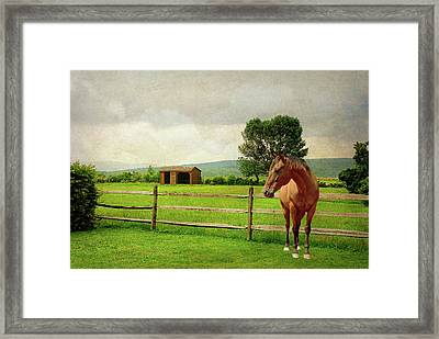 Framed Print featuring the photograph Stallion At Fence by Diana Angstadt