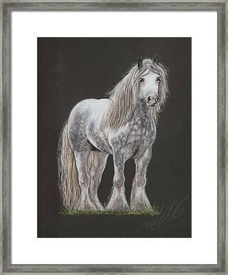 Stallion Dunbroody Framed Print by Terry Kirkland Cook